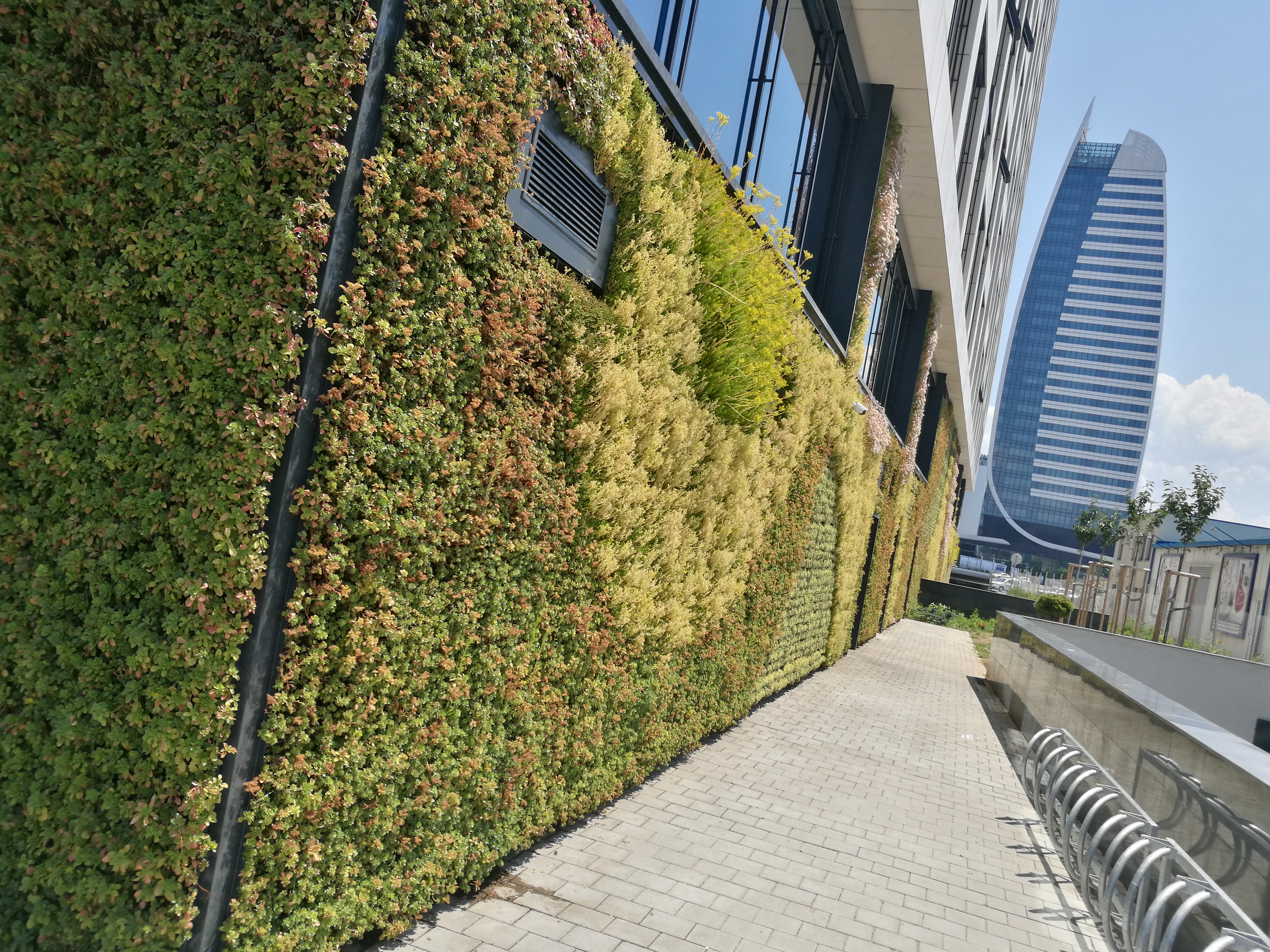 Vertical garden project BGreenwall