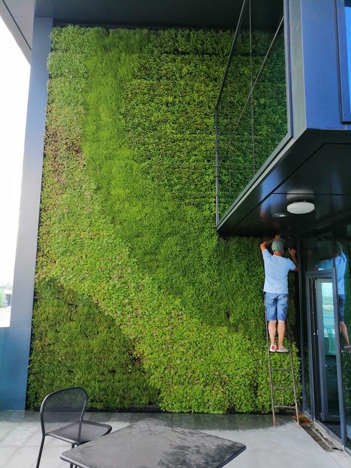 Zelena stena realizacia BGreenwall